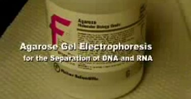 تهیه ژل اگارز الکتروفورز افتراقی DNA و RNA                                      375x195